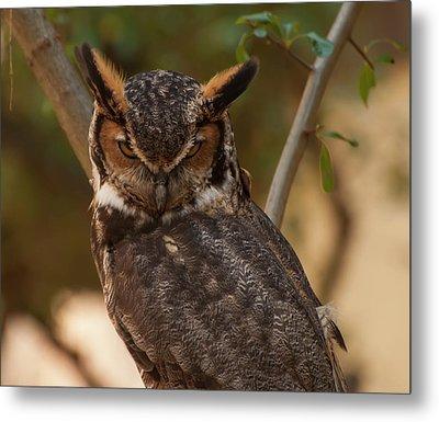 Great Horned Owl In A Tree 2 Metal Print by Chris Flees