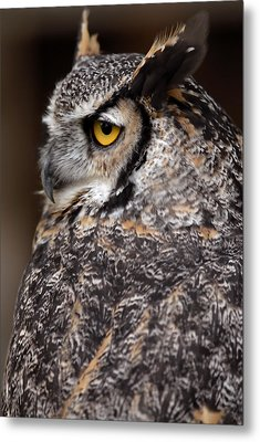 Metal Print featuring the photograph Great Horned Owl by JT Lewis