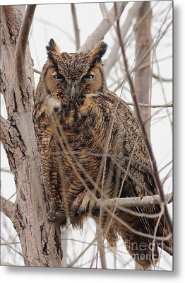Great Horned Owl Perched Metal Print by Wingsdomain Art and Photography