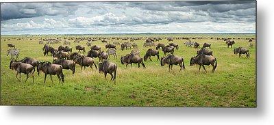 Great Migration In Serengeti Plains Metal Print by Kirill Trubitsyn
