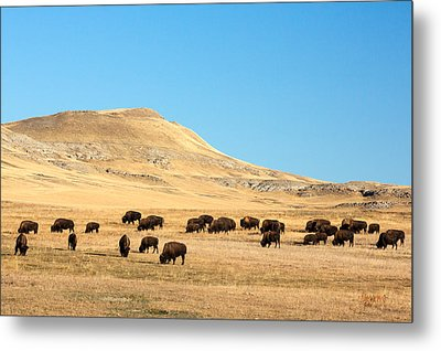 Great Plains Buffalo Metal Print by Todd Klassy