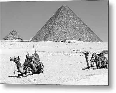 Metal Print featuring the photograph great pyramids of Giza by Silvia Bruno