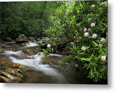 Great Smoky Mountains Rosebay Rhododendron Metal Print by Mark VanDyke