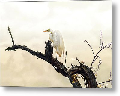 Great White Egret #1 Metal Print by Donnie Smith