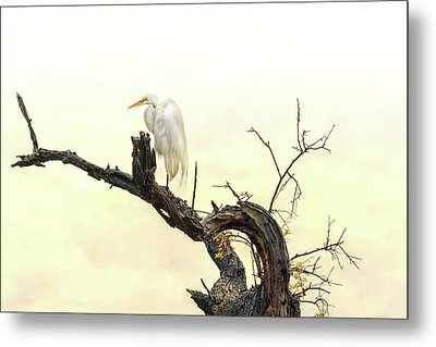 Great White Egret #2 Metal Print by Donnie Smith