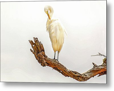 Great White Egret #3 Metal Print by Donnie Smith
