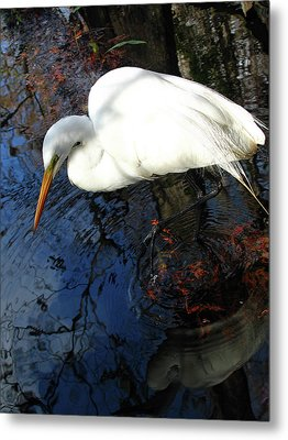 Great White Egret Metal Print by Juergen Roth