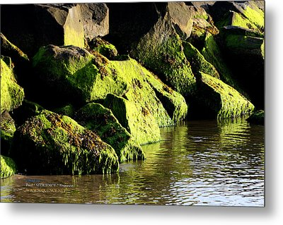 Metal Print featuring the photograph Green Algae by Paul SEQUENCE Ferguson             sequence dot net
