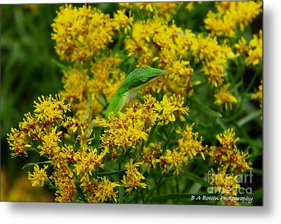 Green Anole Hiding In Golden Rod Metal Print by Barbara Bowen
