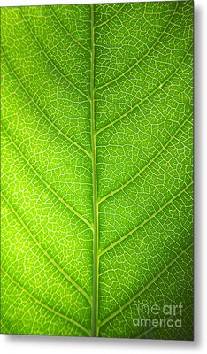 Green Botany -  Part 3 Of 3 Metal Print by Sean Davey