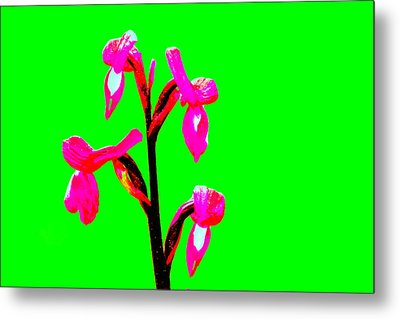 Green Champagne Orchid Metal Print