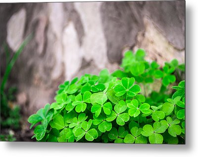 Green Clover And Grey Tree Metal Print by John Williams