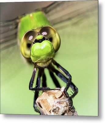 Green Dragonfly Face Metal Print by Jim Hughes