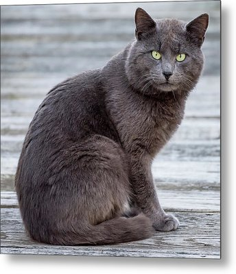 Green Eye Stare Cat Square Metal Print by Terry DeLuco