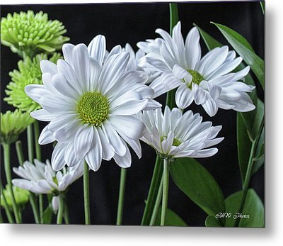 Metal Print featuring the photograph Green Eyed Daisy by Bonnie Willis