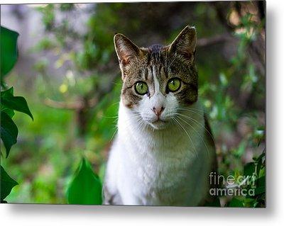 Green Eyes - Cat In The Wilderness Metal Print