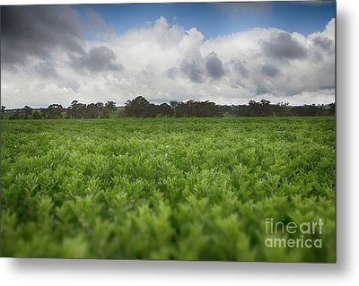Metal Print featuring the photograph Green Fields 4 by Douglas Barnard