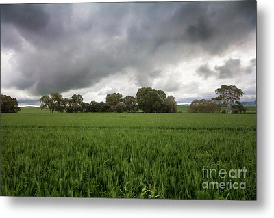 Metal Print featuring the photograph Green Fields 5 by Douglas Barnard