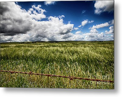 Metal Print featuring the photograph Green Fields by Douglas Barnard