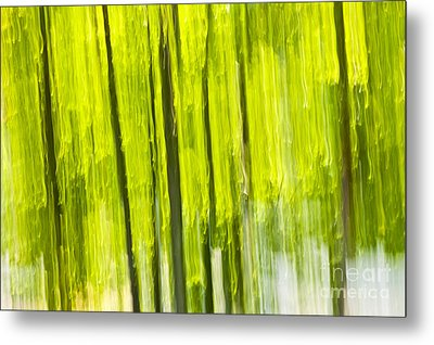 Green Forest Abstract Metal Print