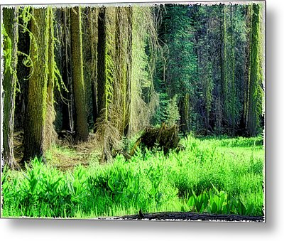 Metal Print featuring the photograph Green Forest by Michael Cleere