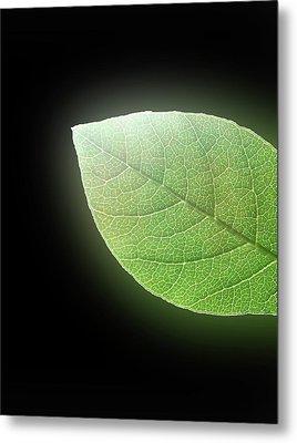 Green Glow Metal Print