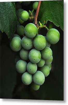 Green Grapes Metal Print by Marion McCristall