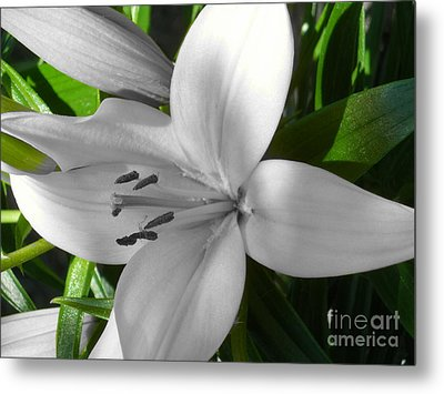Green Highlighted Lily Metal Print