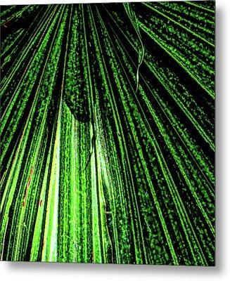 Green Leaf Forest Photo Metal Print