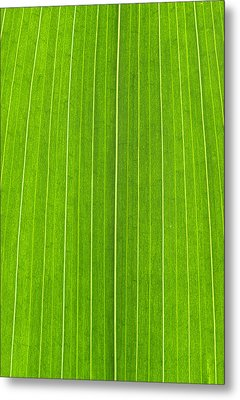Green Leaf Metal Print by Frank Tschakert