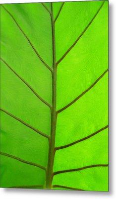 Green Leaf Metal Print by Marcus Adkins