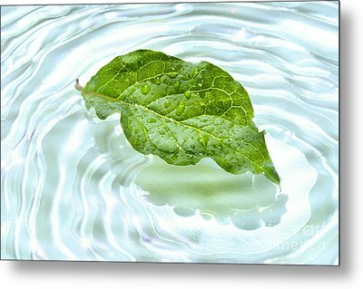 Green Leaf With Water Reflection Metal Print by Sandra Cunningham