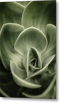 Green Leaves Abstract IIi Metal Print by Marco Oliveira