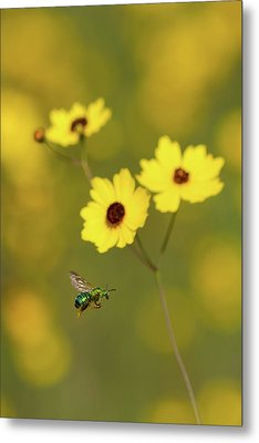 Green Metallic Bee Metal Print