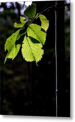 Metal Print featuring the photograph Green by Odd Jeppesen