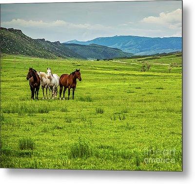 Green Pastures Metal Print by Jon Burch Photography