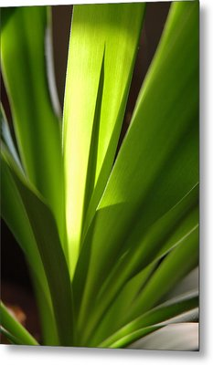 Green Patterns Metal Print by Jerry McElroy