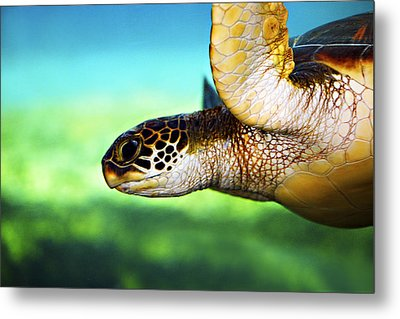 Green Sea Turtle Metal Print by Marilyn Hunt