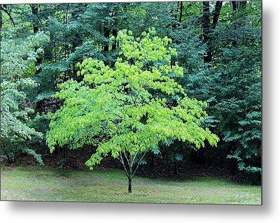 Green Standout Tree Metal Print