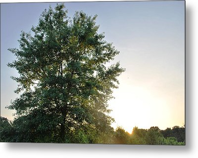 Green Tree Bright Sunshine Background Metal Print