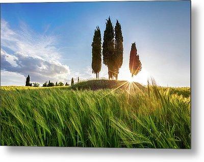 Green Tuscany Metal Print by Evgeni Dinev
