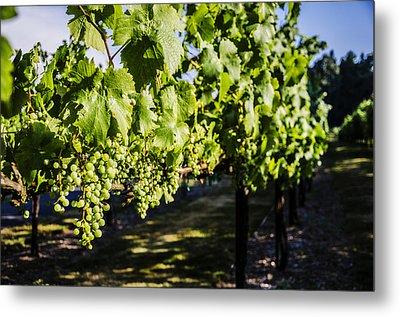 Green Wine Grapes 2 Metal Print by Pelo Blanco Photo