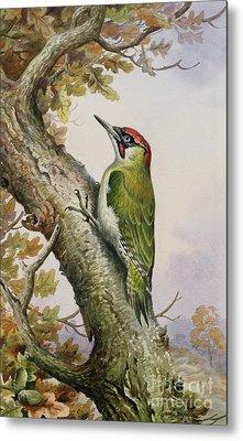 Green Woodpecker Metal Print by Carl Donner