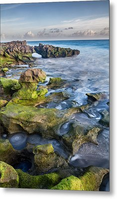Greenery In Coral Cove Metal Print by Andres Leon
