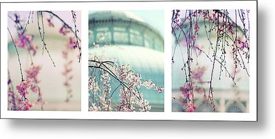 Metal Print featuring the photograph Greenhouse Blossoms Triptych by Jessica Jenney
