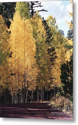 Metal Print featuring the photograph Greer Arizona Aspen Trees by Juls Adams