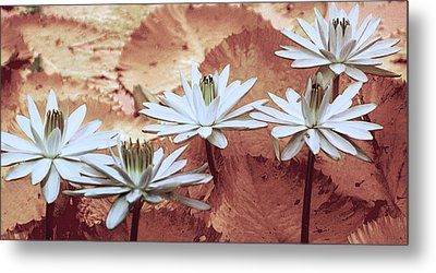 Greeting The Day Metal Print by Holly Kempe