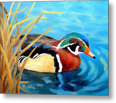 Greeting  The Morning  Wood Duck Metal Print by Carol Reynolds
