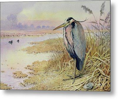 Grey Heron Metal Print by John James Audubon