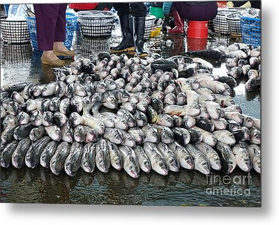 Metal Print featuring the photograph Grey Mullet Fish For Sale At The Fish Market by Yali Shi